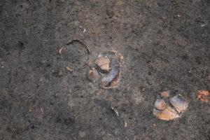 写真は、土器が出土した状況です。